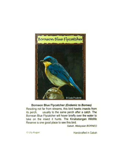 Fridge-Magnet—Blue-Flycatcher
