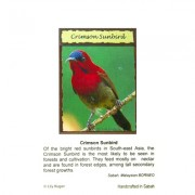 Fridge-Magnet—Crimson-Sunbird