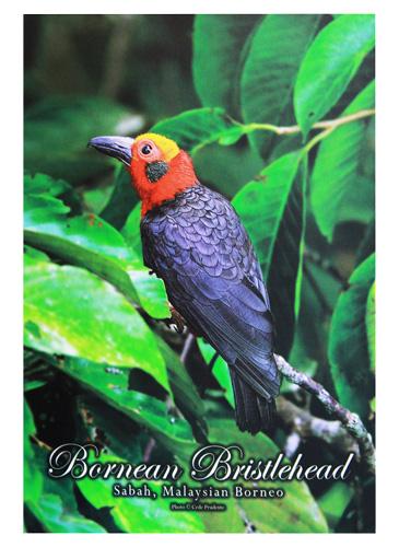 Postcard—Birds-(1)
