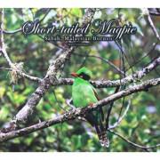 Postcard—Birds-(2)