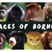 Postcard—Faces-of-Borneo