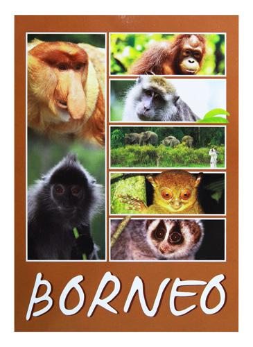 Postcard—Wildlife-Borneo